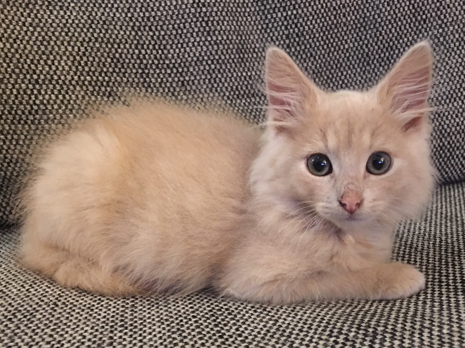 sandy kitty up for adoption